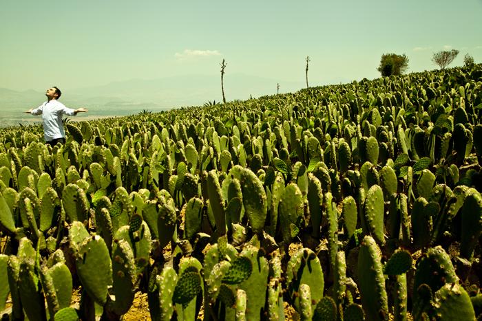 chef mora, nopales, paisaje, sano, atractivo, mexico, cocina mexicana, verse bien