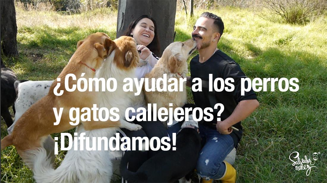 salvador nunez, perros y fatos callejeros, animales en adopcion