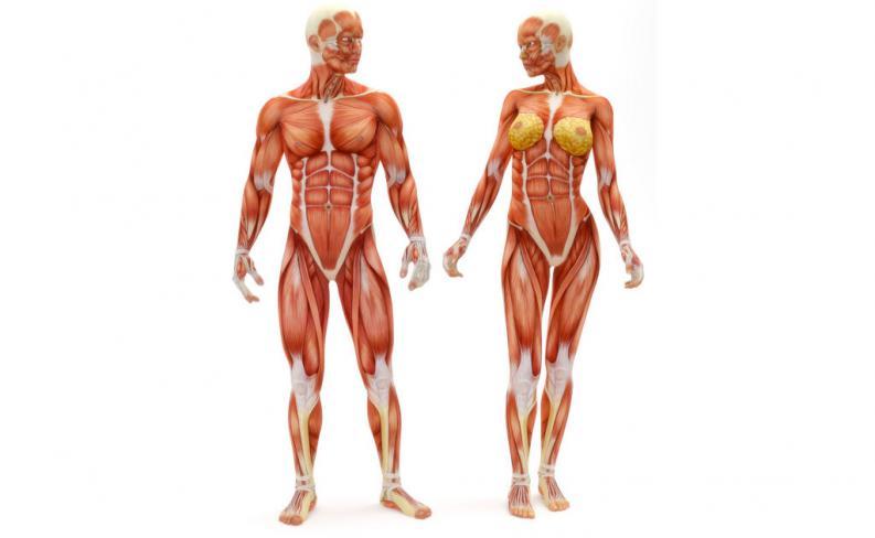 perdida de musculo con la edad, sarcopenia